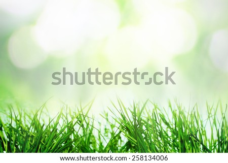 Nature bokeh in spring with fresh grass  - stock photo