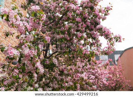 nature, botany and flora concept - close up of beautiful blooming branch with flowers in spring garden - stock photo