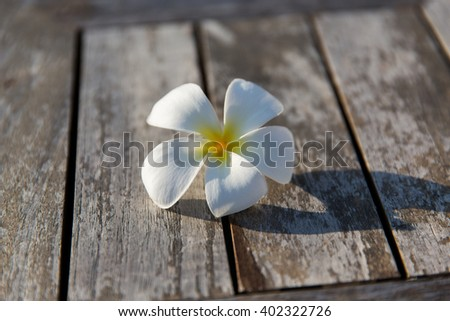 nature, botany and flora concept - close up of white beautiful exotic flower on wood - stock photo