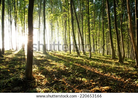 Nature. Breaking Dawn in the forest. Sunrise - stock photo