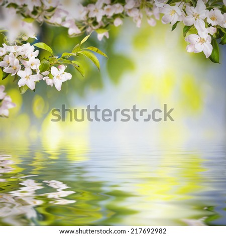 Nature composition. Apple flowers on a blurred nature background, reflected in water - stock photo