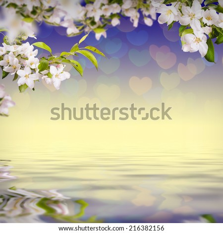 Nature composition. Apple flowers on a colorful background, reflected in water - stock photo