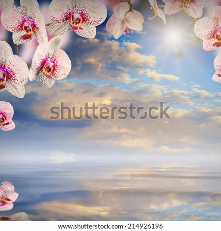 Nature composition. Orchid flowers on a blurred sky background, reflected in water - stock photo