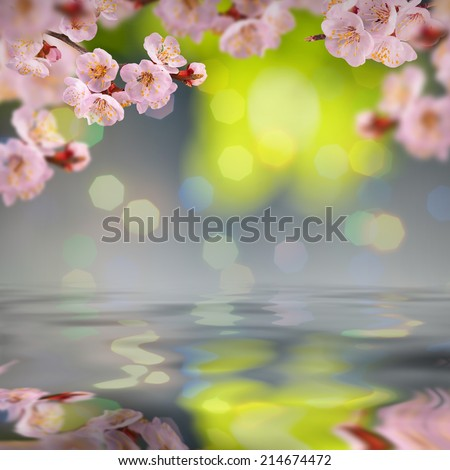 Nature composition. Sakura flowers on a blurred nature background, reflected in water - stock photo
