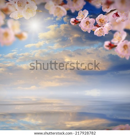 Nature composition. Sakura flowers on a blurred sky background, reflected in water  - stock photo