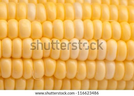 nature corn/autumn corn - stock photo
