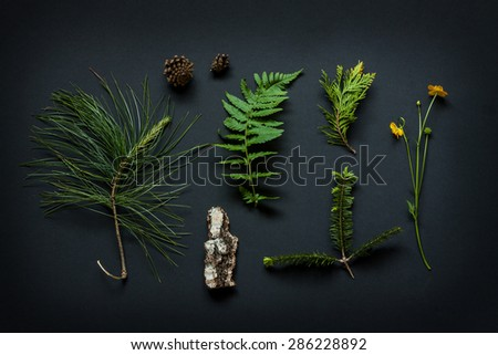 Nature details collection - poster concept. Tree bark, cones, marsh marigold flower, pine tree branches and fern leaf with snail on black background captured from above. - stock photo
