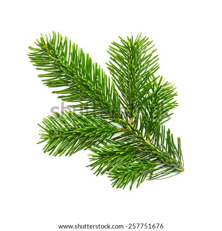 nature fir branche on white background - stock photo