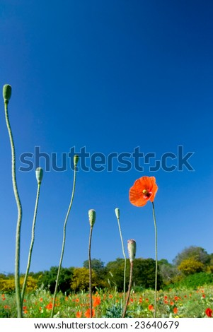 nature flower field closeup - stock photo