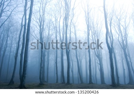 Nature. Fog in dark forest. - stock photo