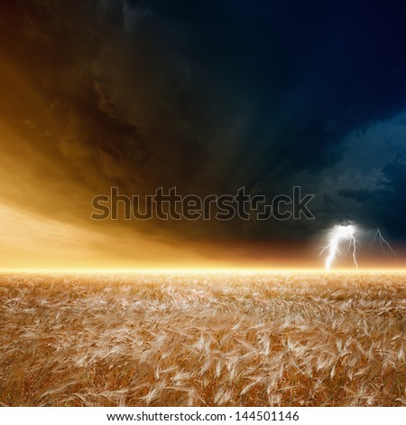 Nature force background - field of ripe barley, wheat, dark stormy sky with lightning, thunderbolt - stock photo