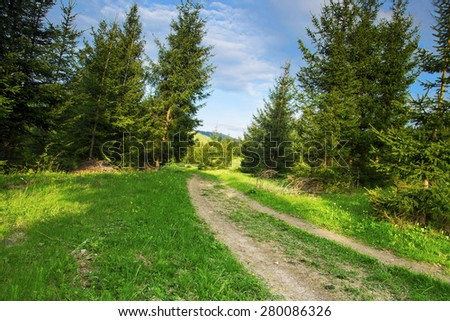 Nature Forest Road Landscape with Fir Tree Forest,Green Vegetation, Meadows and Bright Blue Sky, Beautiful Rural Scene - stock photo