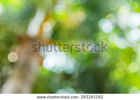 Nature green bokeh from tree background