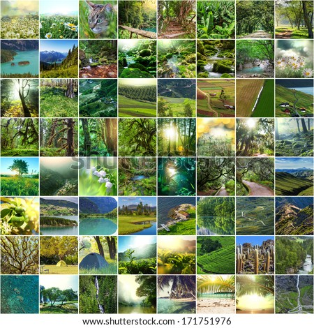 Nature green collage - stock photo