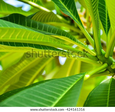 Nature Green leaf.Nature leaf.Nature background.nature abstract.nature green.leaf background.leaf texture.green energy - stock photo