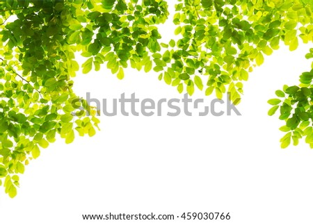 nature green leaves isolated on a white background with empty space
