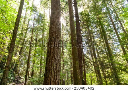 nature green wood sunlight backgrounds. - stock photo