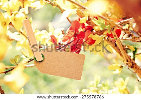 nature greeting card background - copy space for your text - stock photo
