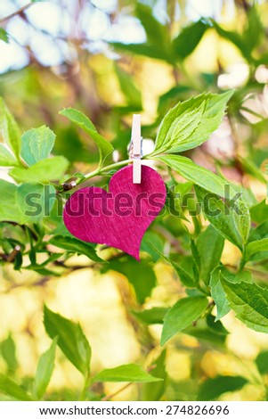 nature greeting card background - red heart on tree - stock photo