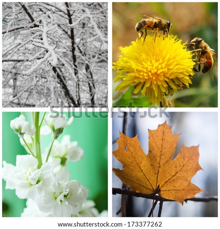 Nature in winter, spring, summer and autumn. Four seasons.  - stock photo