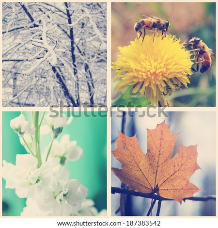 Nature in winter, spring, summer and autumn. Four seasons, instagram effect - stock photo