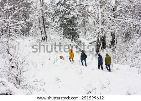 Nature, landscape. People walk in the woods in the snow. Overcast. Without the use of filters. - stock photo