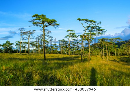 Nature mountain and Pine forest landscape , Reflection light and shadow , dark-toned color . Location Phu-Soi-Dao Uttaradit Province , North of Thailand