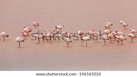Nature of Bolivia. Boundless white saline soils and mountain plateaus. Fine lagoons with a set of a flamingo. - stock photo