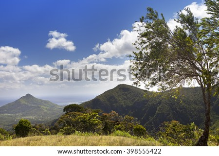 Nature of Mauritius. Wood and mountains - stock photo