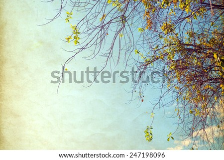 nature of vintage tree flower in summer ,paper art texture - stock photo