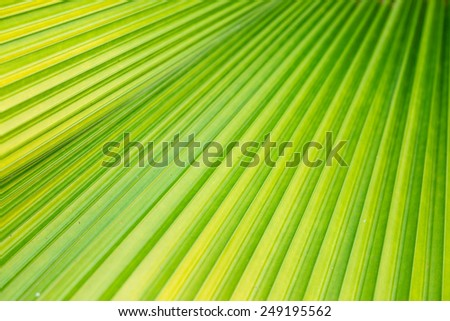 Nature patten green leaf of palm