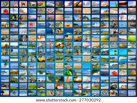Nature photo (animal, landscape, beach). Collage background - stock photo