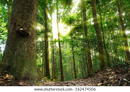 Nature rain forest with morning sunlight - stock photo