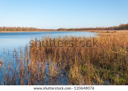 Nature reserve with a natural pond and in the foreground a detailed view at grasses and rushes. - stock photo