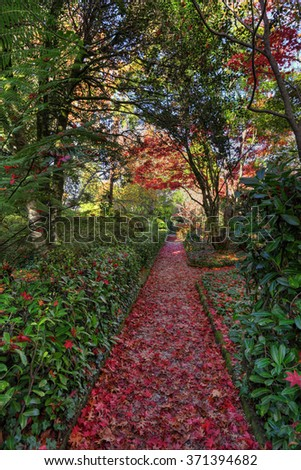Nature rolls out the red carpet.  This pathway covered in fallen leaves of mostly red and rustic brown from nearby trees.  Blue Mountains, Australia.