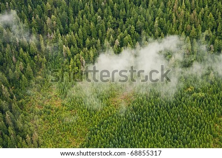 Nature's tree nursery - Tongass National Forest aerial showing regrowth after clear cut logging - stock photo