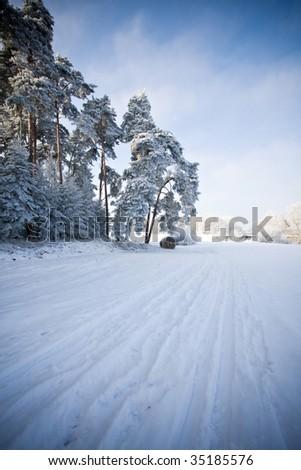 nature scene in winter - stock photo