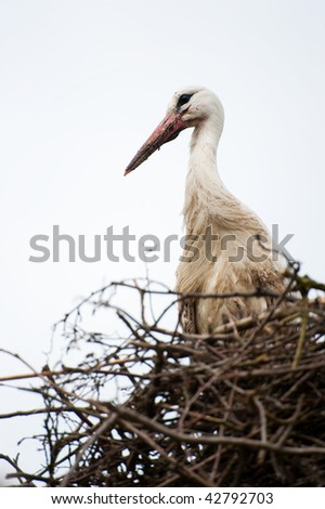 Nature stork bird standing on nest in landscape