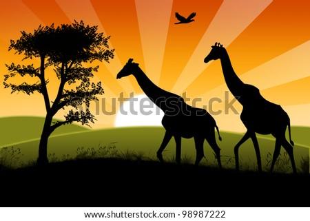 Nature sunset - stock photo