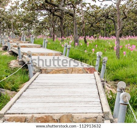 Nature trail in the nation park with pink flower field. - stock photo