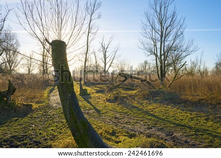 Nature under a sunny sky in winter - stock photo