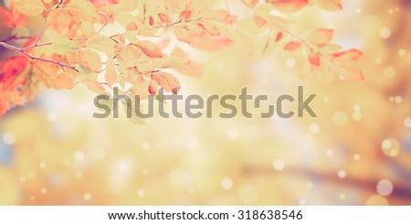 Nature vintage autumn background with golden foliage - stock photo