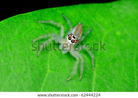 nature wild insect - stock photo