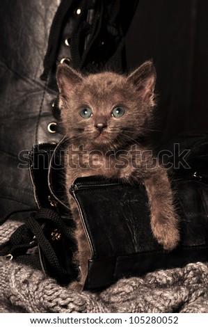 naughty kitten in shoe - stock photo