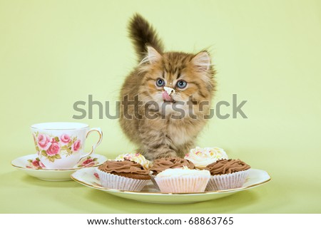 Naughty kitten licking creamy cupcakes - stock photo