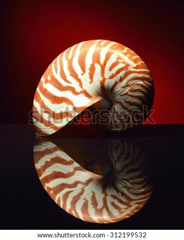 Nautilus on black background