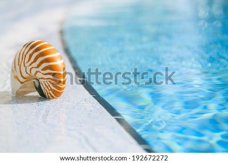 nautilus shell at resort swimming pool edge,  shallow dof - stock photo