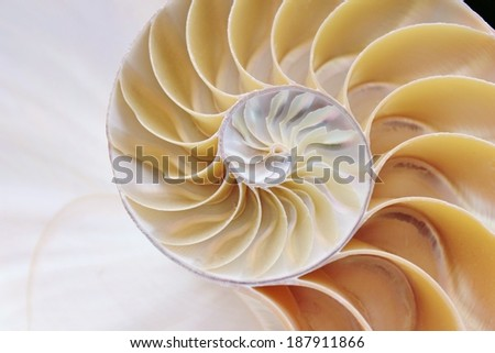 nautilus shell cross section spiral  - stock photo