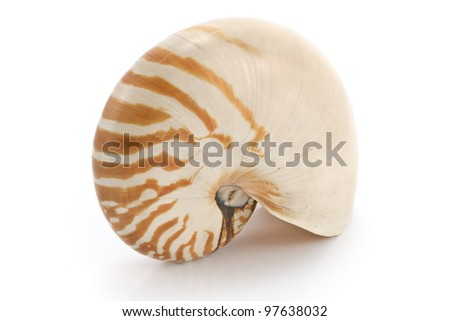 Nautilus shell isolated on white