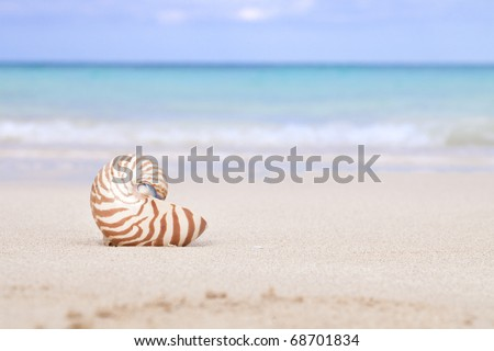 nautilus shell on beach  and blue tropical sea, shallow dof - stock photo